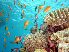 Шарм-Эль-Шейх – центр подводного плавания